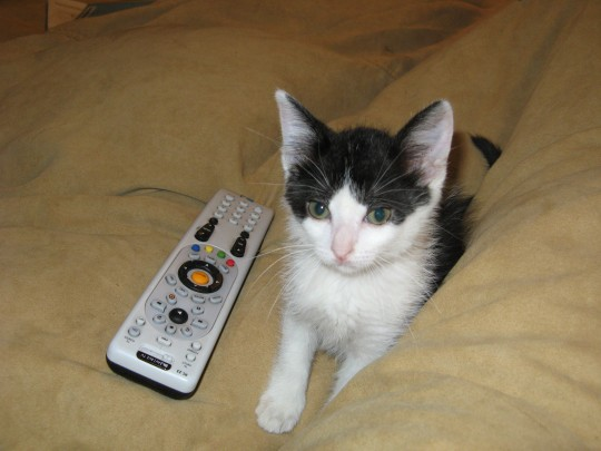 Molly and the Remote